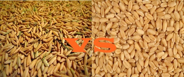 Difference Between Rabi And Kharif Crops In Pakistan