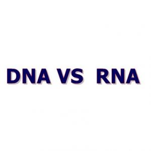 What are the main Differences Between DNA and RNA